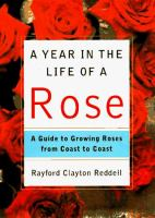 A Year in the Life of A Rose