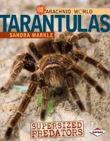 Tarantulas : supersized predators
