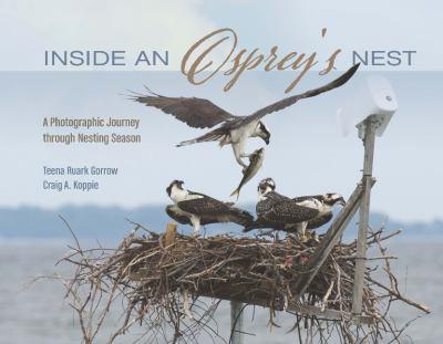 Inside an osprey's nest : a photographic journey through nesting season