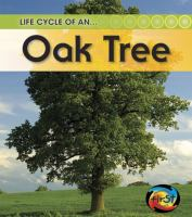 Life Cycle of An-- Oak Tree