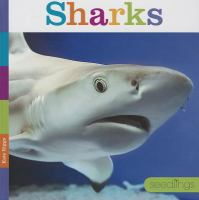 Cover image for Sharks / Kate Riggs.