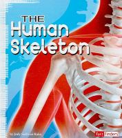 Cover image for The human skeleton