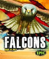Cover image for Falcons : Birds of prey