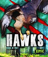 Cover image for Hawks : Birds of prey