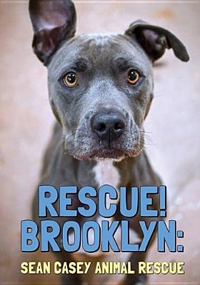 Rescue! Brooklyn : Sean Casey animal rescue