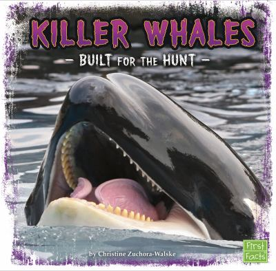 Killer whales : built for the hunt